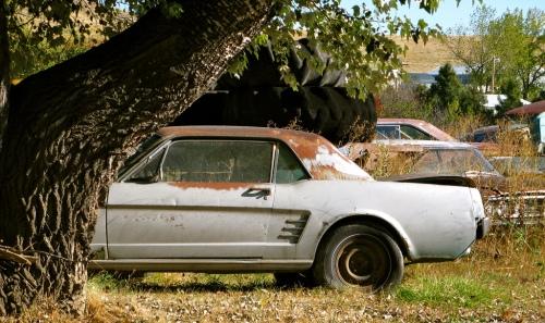 a resposta da natureza: árvore engolindo um mustang 1966