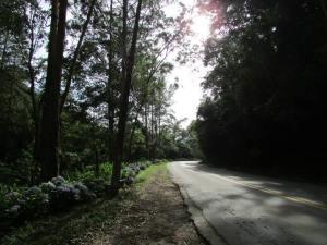 morro acima, com hortênsias ladeando a estrada tranquila