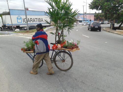 numa periferia, o verde transita sobre o asfalto, o homem pobre mas livre levando a saúde aum mundo doente - foto de roberson miguel.