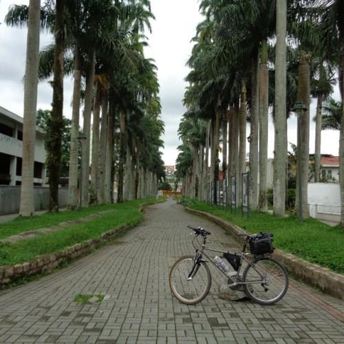 minha bicicleta na Rua das Palmeiras, no centro de Joinville, em janeiro último.