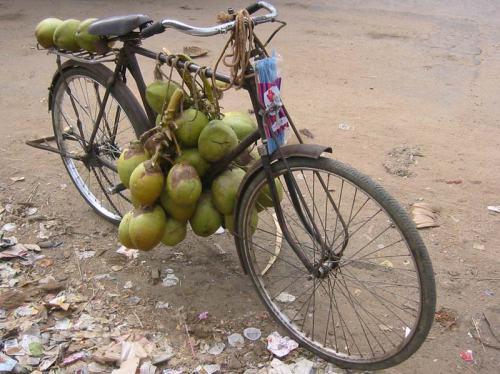 bicicleta indiana. cocos para se fazer uma graninha.