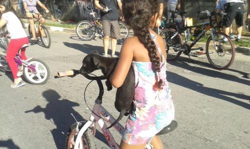 até cachorro passeando...